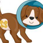 Hoe zit het nu met castratie en sterilisatie bij honden?