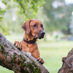 Dagje uit met je hond in de lente? 5 ultieme tips