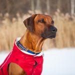 Hondenkleding: inspiratie en tips