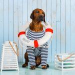 5 tips voor een geslaagd dagje zwemmen met je hond