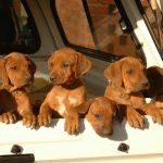 Hoe neem je jouw hond mee in de auto? Handige tips